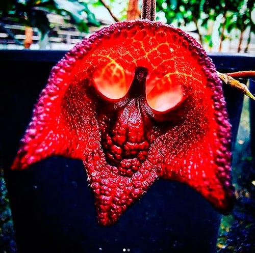 https://fusionasturias.com/entrevistas/carlos-magdalena-el-mesias-de-las-plantas-asturiano.htm Carlos Magdalena. El Mesías de las Plantas asturiano