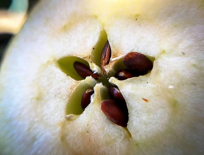 Corazón de manzana.